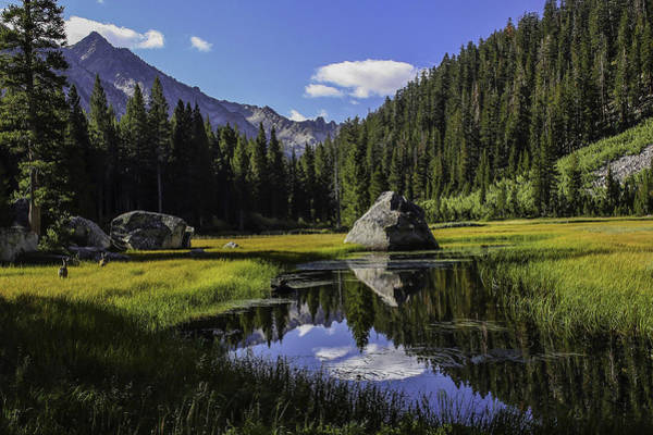Morning At Grouse Meadow Art Print