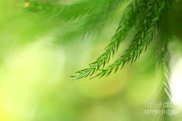 Photograph - Morning Bokeh by Beve Brown-Clark Photography