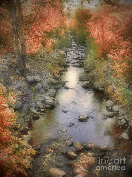 Photograph - Morning By The Creek by Tara Turner