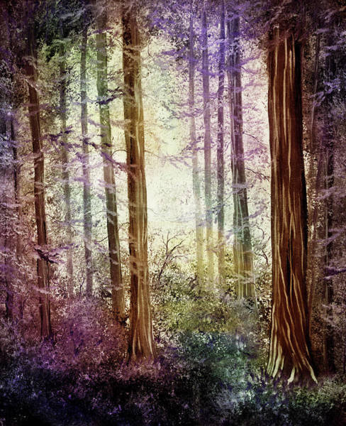 Morning Colors On The Redwoods Art Print