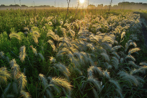 Photograph - Morning Comes To Glacial Park Grasses by Ray Mathis