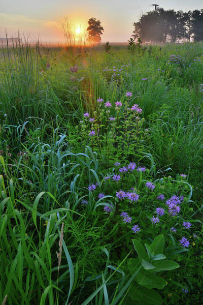 Photograph - Morning Comes To Glacial Park's Lost Valley by Ray Mathis
