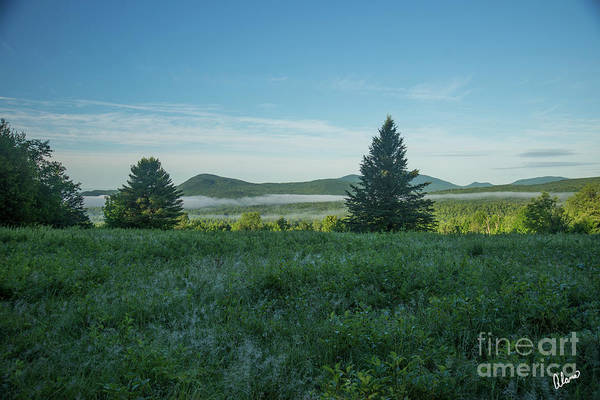 Photograph - Morning Dew And Mist by Alana Ranney