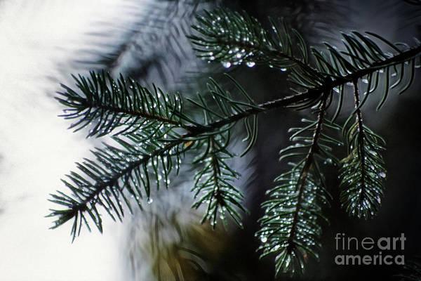 Photograph - Morning Dew by Brad Allen Fine Art