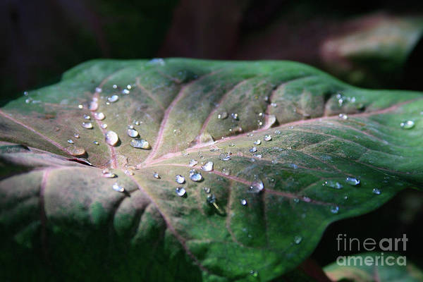 Photograph - Morning Dew by Jerry Bunger