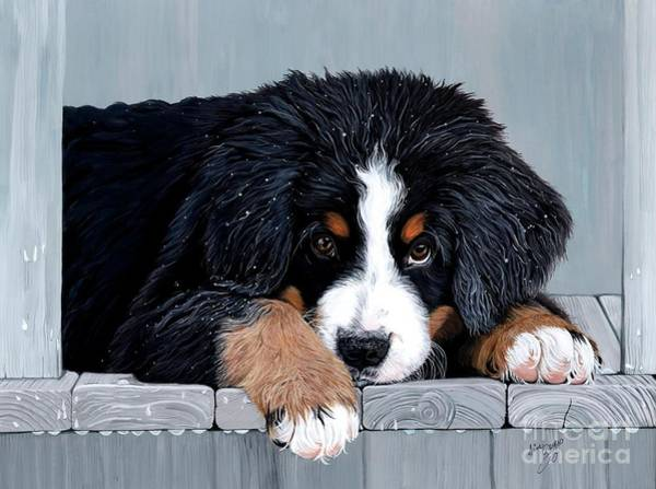 Deck Painting - Morning Dew - Bernese Mountain Dog by Liane Weyers