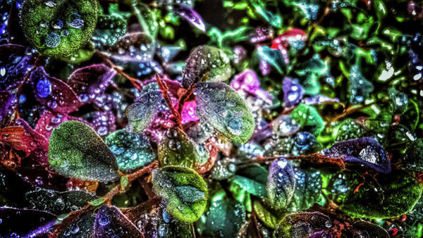 Photograph - Morning Dew by Mike Dunn