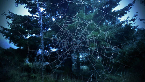 Photograph - Morning Dew Spider Web by Pacific Northwest Imagery