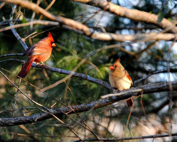 Photograph - Morning Discussion by Jai Johnson
