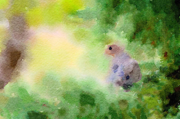Digital Art - Morning Dove In Green by Steven Santamour