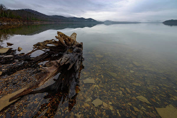 Photograph - Morning Driftwood by Michael Scott