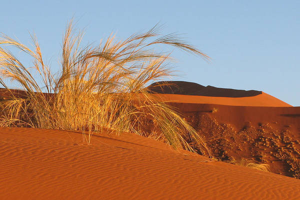 Wall Art - Photograph - Morning Dunes At Sossusvlei by Scott and Rebecca Rothney