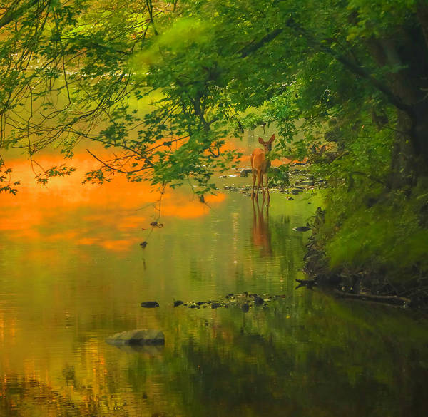 Photograph - Morning Fawn Reflection by Dan Sproul