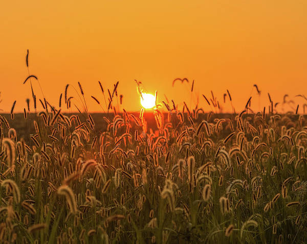 Photograph - Morning Field by Dan Sproul