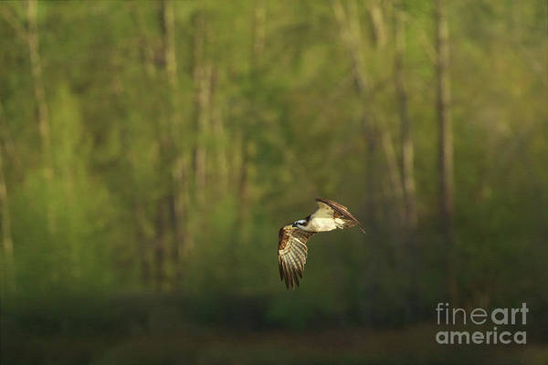 Photograph - Morning Flight by Beve Brown-Clark Photography