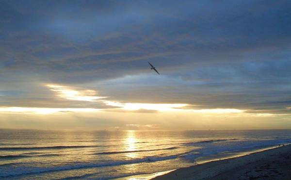 Flagler Beach Photograph - Morning Flight by Cheryl Waugh Whitney