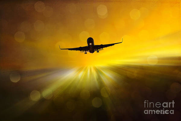 Photograph - Morning Flight by Chris Armytage