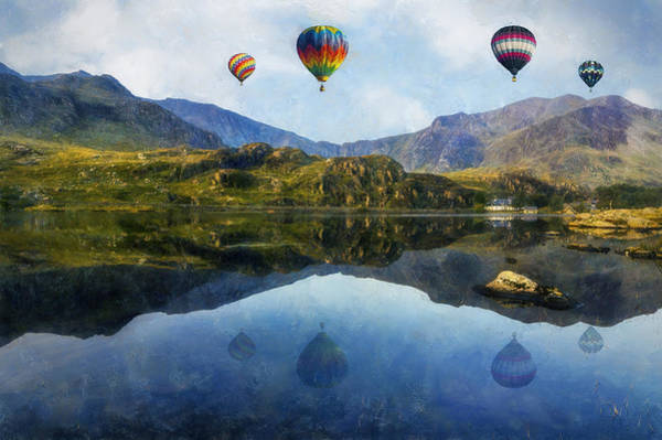 Photograph - Morning Flight by Ian Mitchell