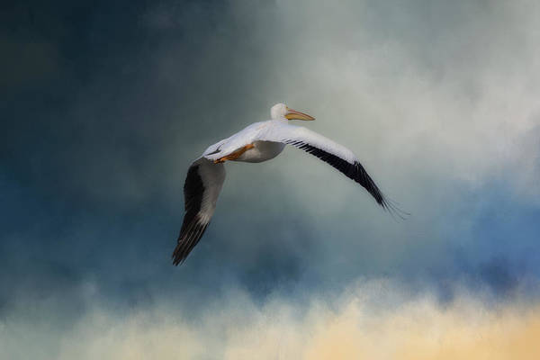 Photograph - Morning Flight by Kim Hojnacki