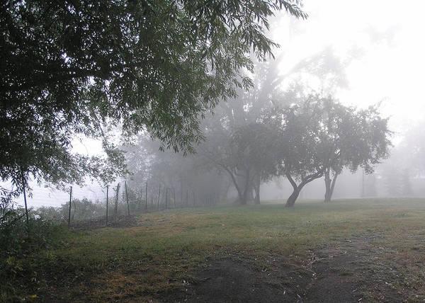 Wall Art - Photograph - Morning Fog - Como Park by Janis Beauchamp