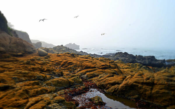 Photograph - Morning Fog At Moonstone Beach - Cambria by Glenn McCarthy Art and Photography