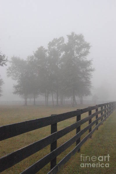 Photograph - Morning Fog by Donna Bentley