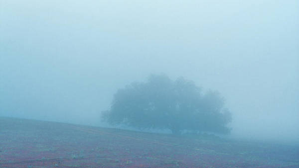 Wall Art - Photograph - Morning Fog by Joseph Smith