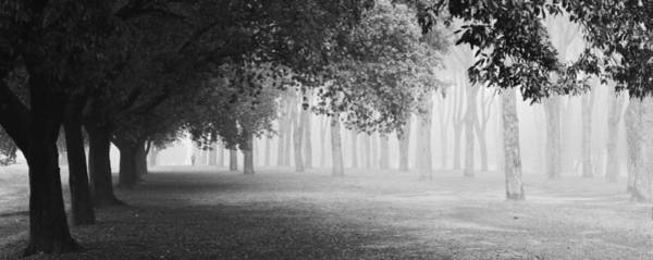 W Photograph - Morning Fog by Matteo Chiarello