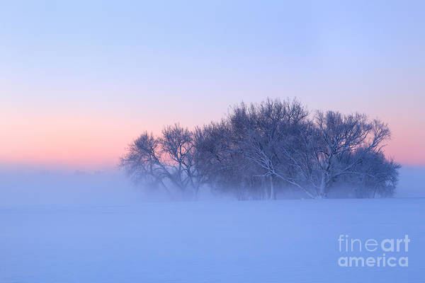 Wall Art - Photograph - Morning Fog  by Ronda Kimbrow