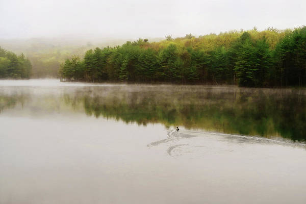 Photograph - Morning Fog by Sue Collura