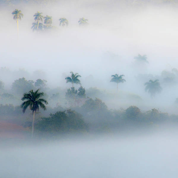Morning Fog, Vinales Valley Art Print