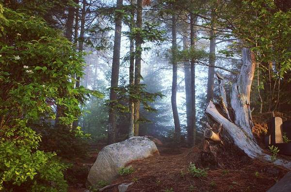 Photograph - Morning Forest Light by Jessica Tabora