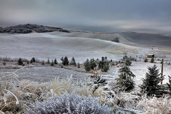 Photograph - Morning Frost by David Patterson