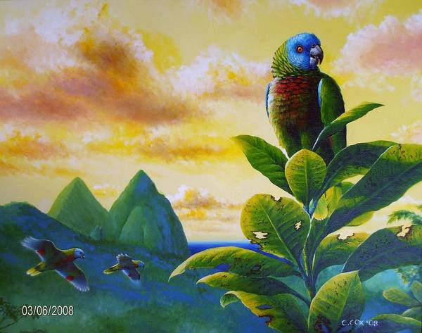 Painting - Morning Glory - St. Lucia Parrots by Christopher Cox