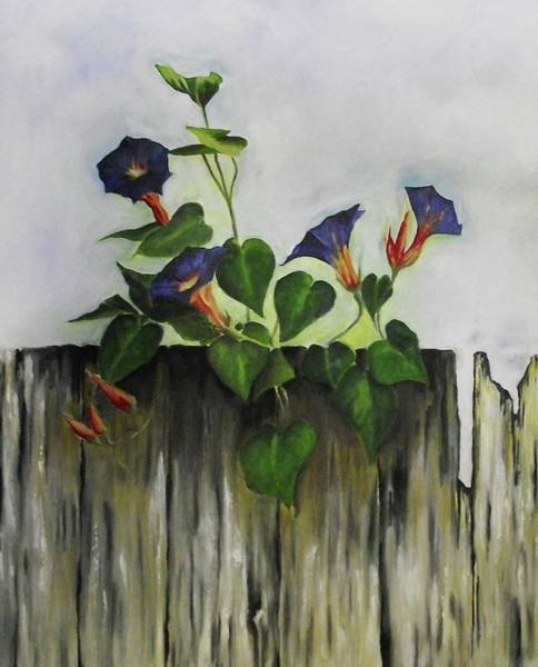 Photograph - Morning Glory by Elizabeth Hoare Gregory