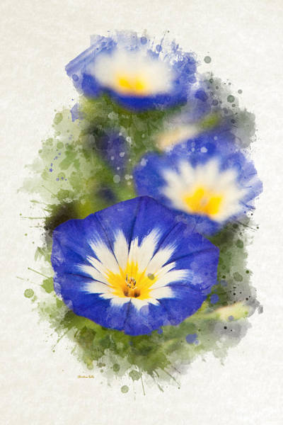Mixed Media - Morning Glory Watercolor Art by Christina Rollo