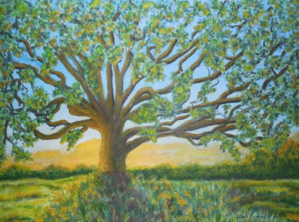 Don Williams Painting - Morning Glow On The Oak by Don Williams