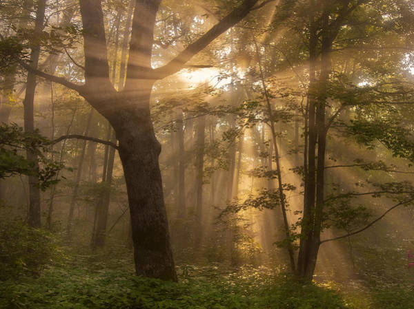 Photograph - Morning God Rays by Ken Barrett