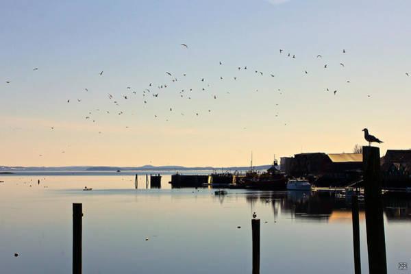 Photograph - Morning Gulls by John Meader