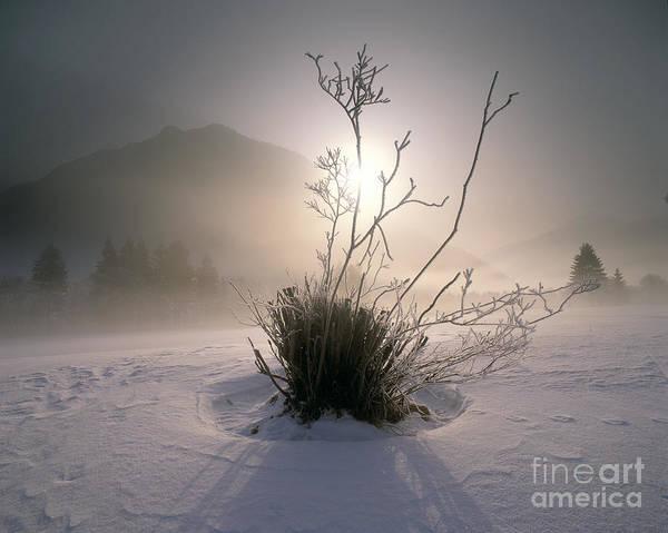 Photograph - Morning Has Broken by Edmund Nagele