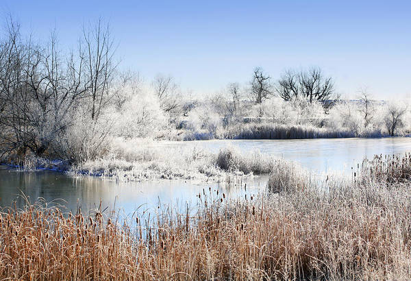 Photograph - Morning Hoar Frost by Marilyn Hunt