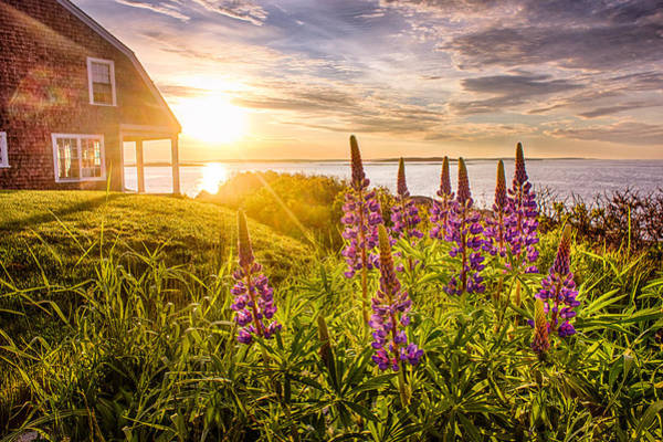 Bailey Photograph - Morning In Maine by Benjamin Williamson