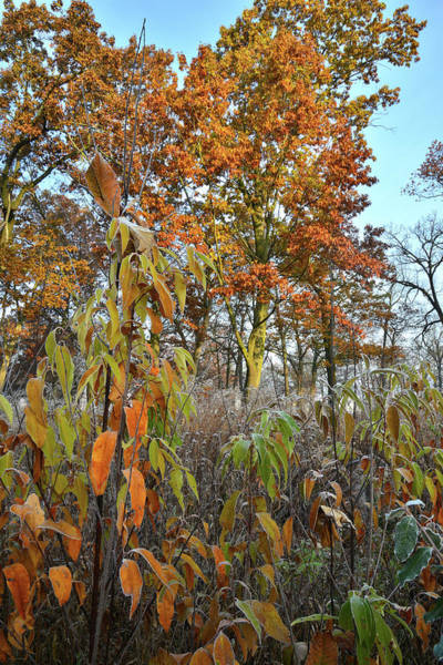 Photograph - Morning In Oak Savannah In Glacial Park by Ray Mathis