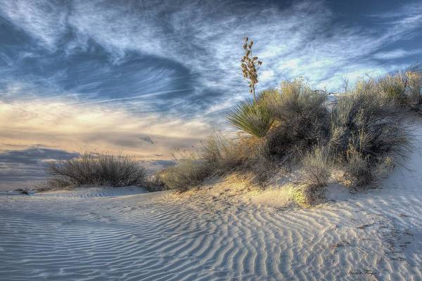 Photograph - Morning In White Sands by Harriet Feagin