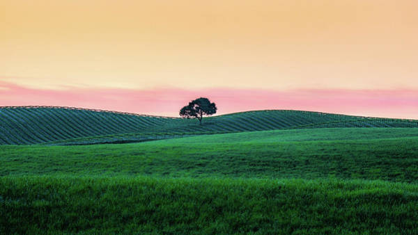 Wall Art - Photograph - Morning Light And Oak Tree by Joseph Smith