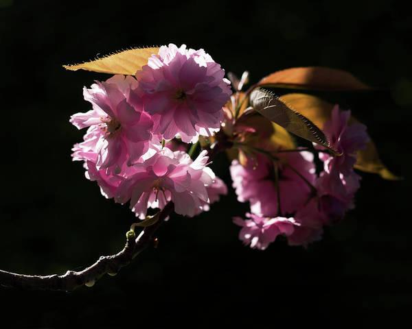 Photograph - Morning Light by Helga Novelli