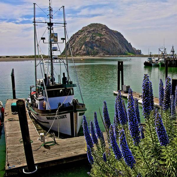 Photograph - Morning Light In The Afternoon, Morro Bay, California by Flying Z Photography by Zayne Diamond