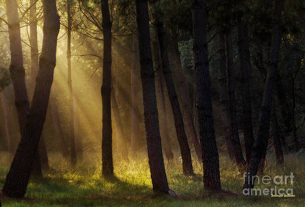 Photograph - Morning Light In The Forest by Dominique Guillaume