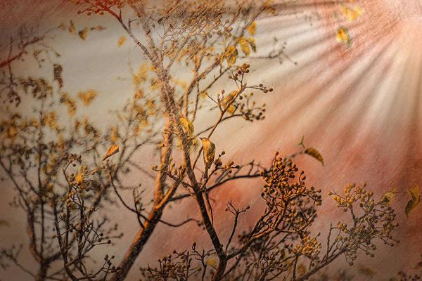 Photograph - Morning Light by John M Bailey