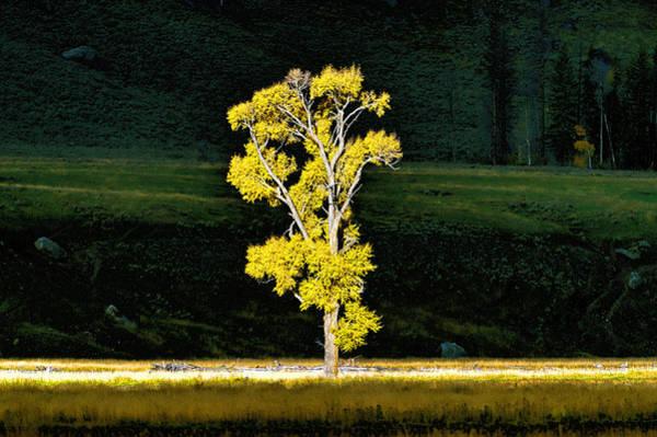 Photograph - Morning Light Lamar Valley by Bill Dodsworth
